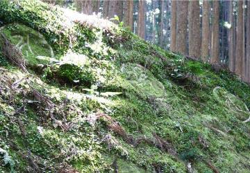 熊野にある円座石(わろうだいし)