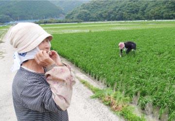 栽培に精を出す生産農家さん